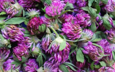 Why Should I Use Herbal Remedies Made Using Whole Plant Medicine?