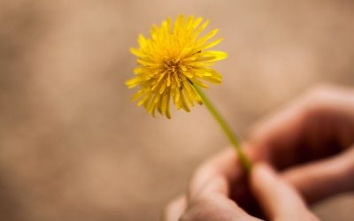 Common Weed Aids Common Health Problems